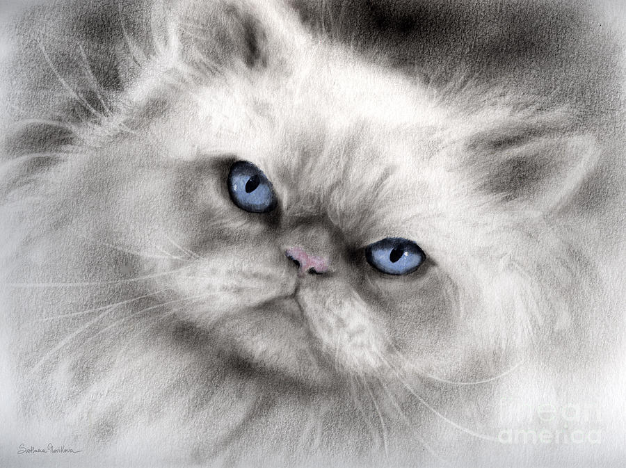 Persian Cat Painting - Persian Cat With Blue Eyes by Svetlana Novikova