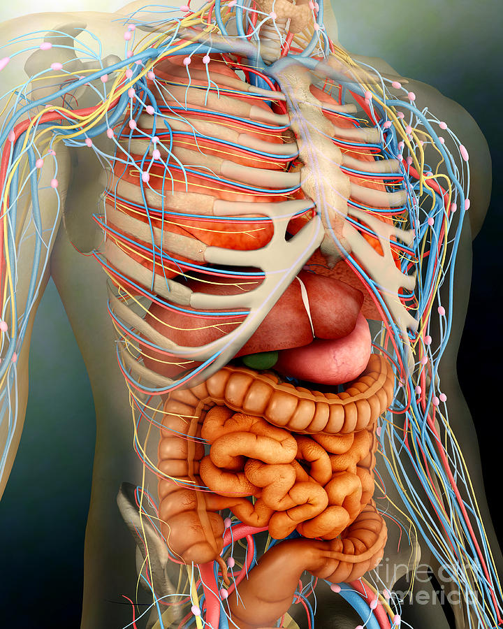 Perspective View Of Human Body, Whole Digital Art