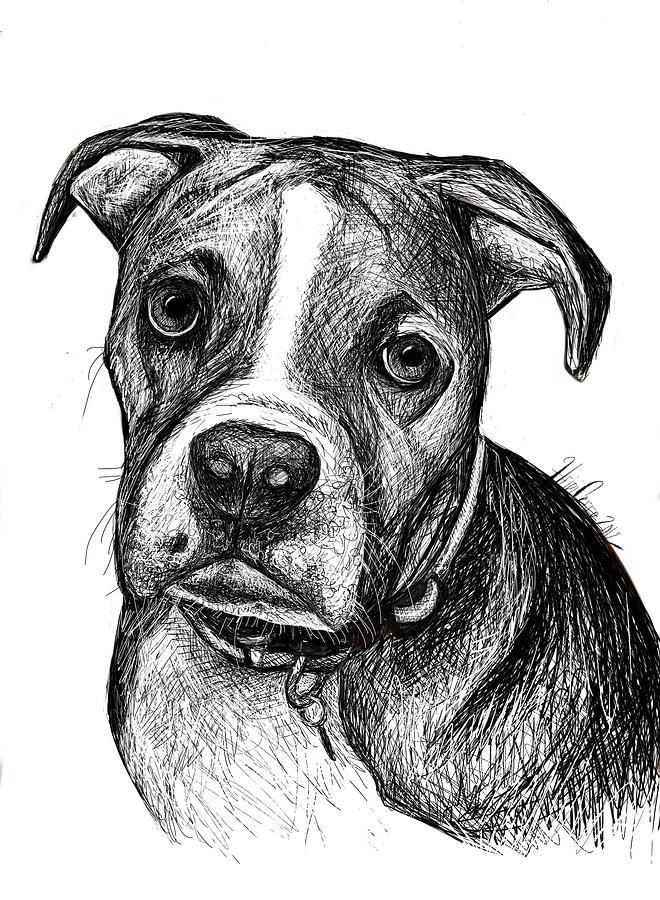 Pet Portraits Boxer Digital Art