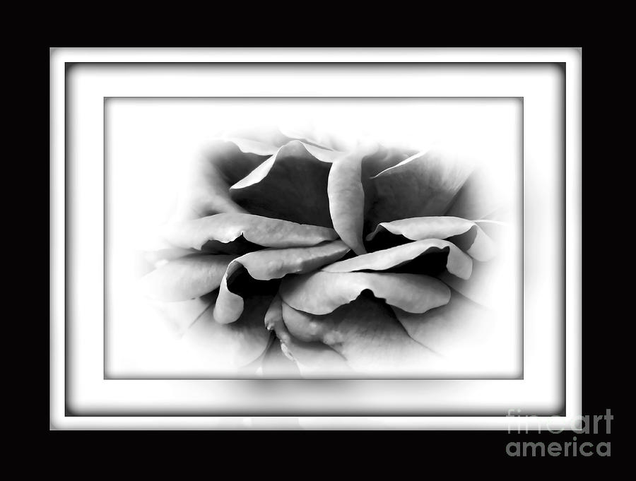 Petals And Shadows 2 Photograph  - Petals And Shadows 2 Fine Art Print
