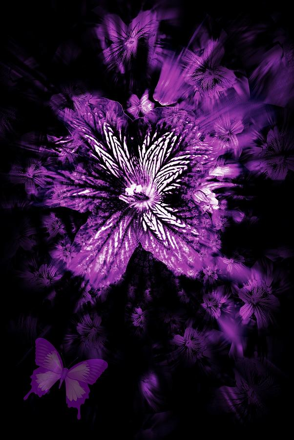 Purple Photograph - Petals From The Purple by Amanda Eberly-Kudamik