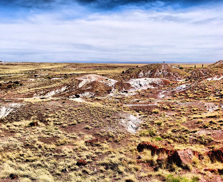 Petrified Forest National Park Photograph