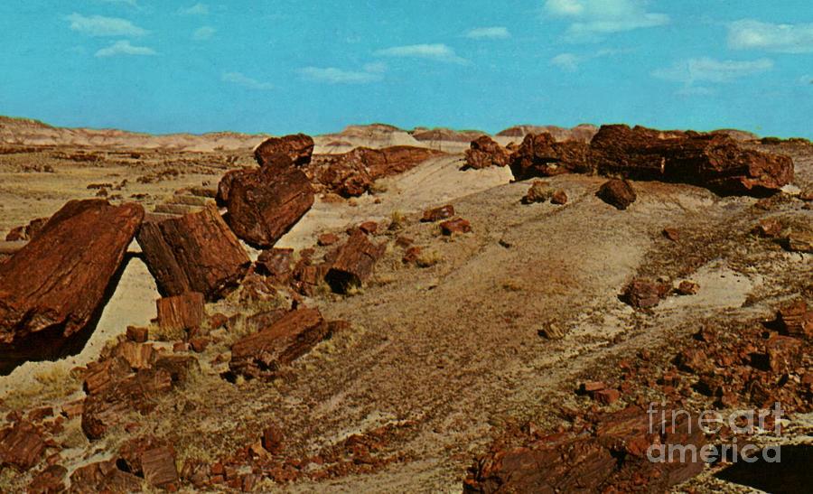 Petrified Forest National Park Photograph