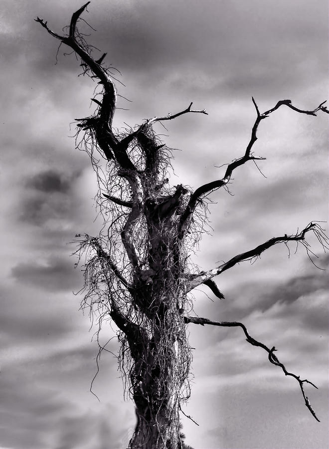 Petrified Tree Photograph  - Petrified Tree Fine Art Print