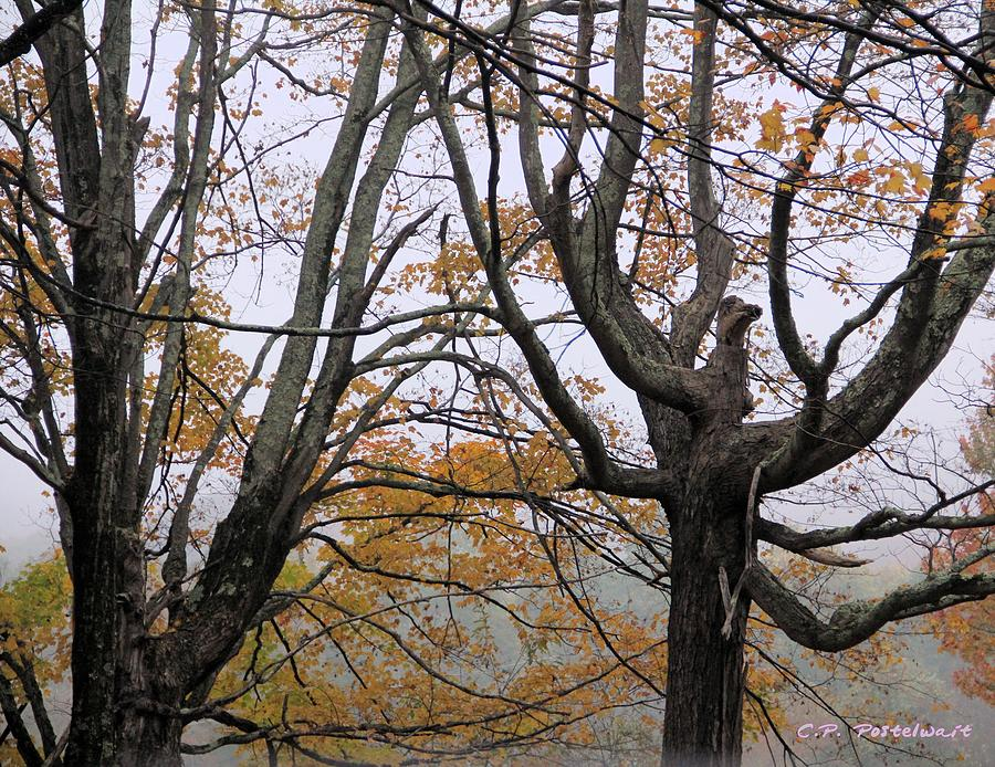 Trees Photograph - Pheonix In The Fall by Carolyn Postelwait
