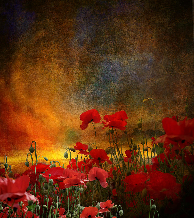 Poppies Photograph - Phil by Jeff Burgess