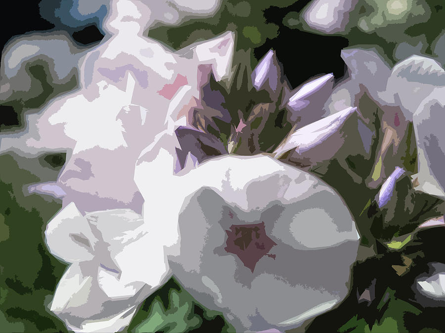 Phlox Digital Art