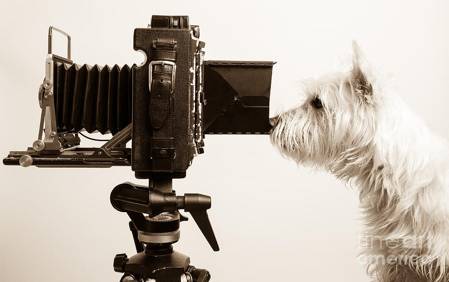View Photograph - Pho Dog Grapher by Edward Fielding