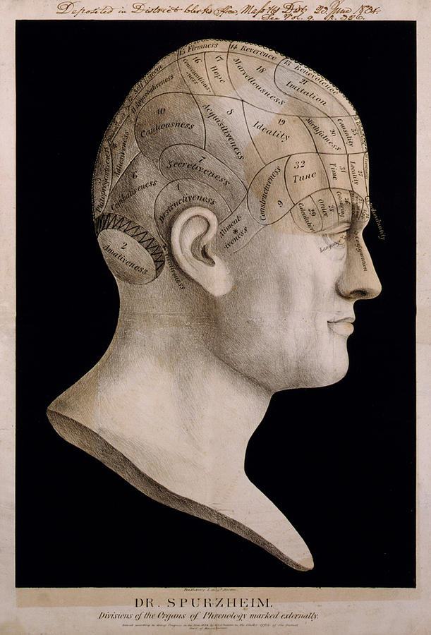 Phrenology Digital Art