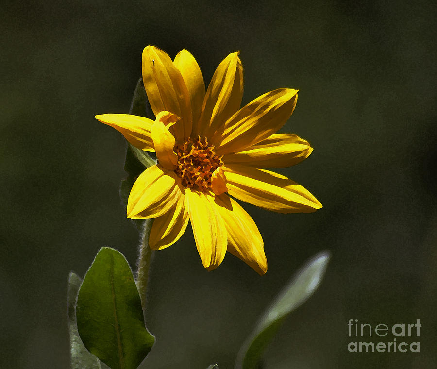 Pickin Wildflowers  Photograph  - Pickin Wildflowers  Fine Art Print