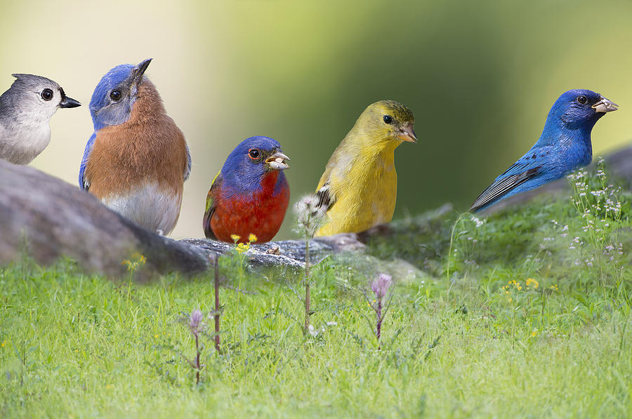 Eastern Bluebird Photograph - Picnic Lunch by Bonnie Barry