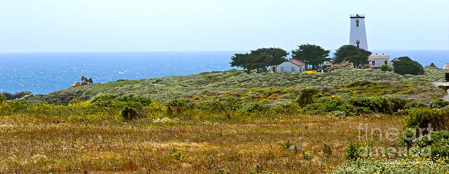 Piedras Blancas Lighthouse Near San Simeon And Cambria Along Hwy 1 In California Photograph  - Piedras Blancas Lighthouse Near San Simeon And Cambria Along Hwy 1 In California Fine Art Print