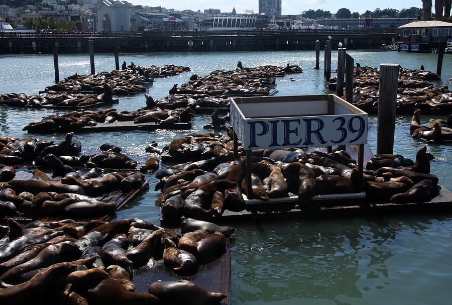 Pier 39 San Francisco Bay Photograph