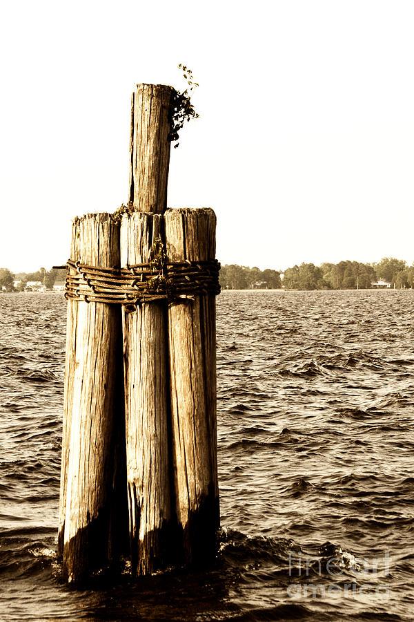 Pier Pilings Photograph