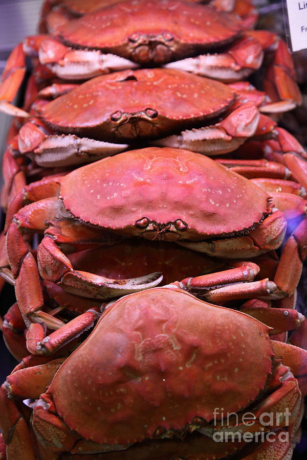 Pile Of Fresh San Francisco Dungeness Crabs - 5d20693 Photograph