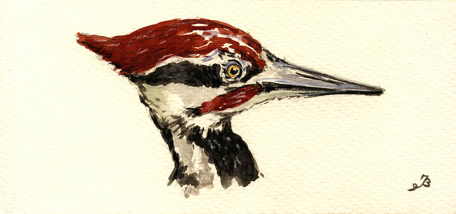 Pileated Woodpecker Head Study Painting