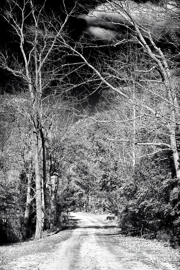 Pine Barrens Path Photograph