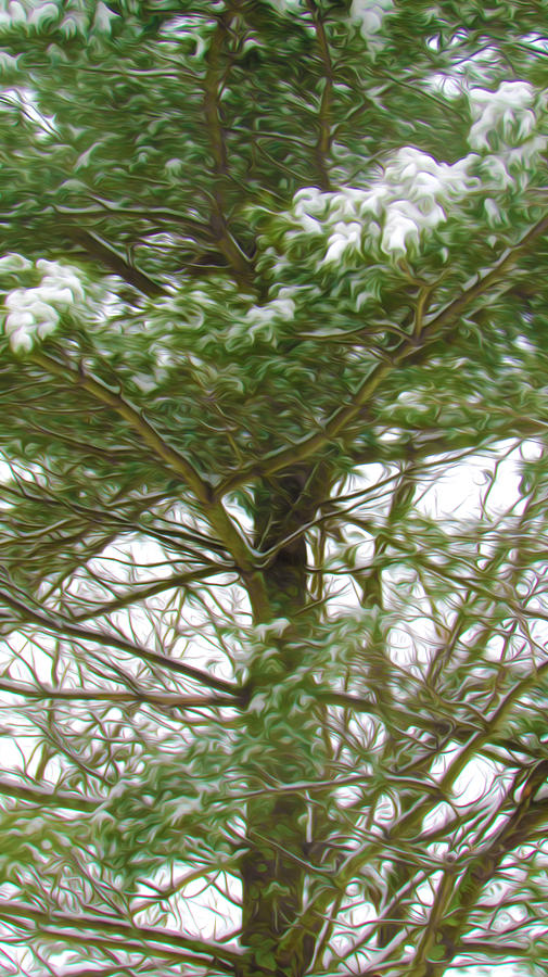 Pine Tree Covered With Snow 1 Painting