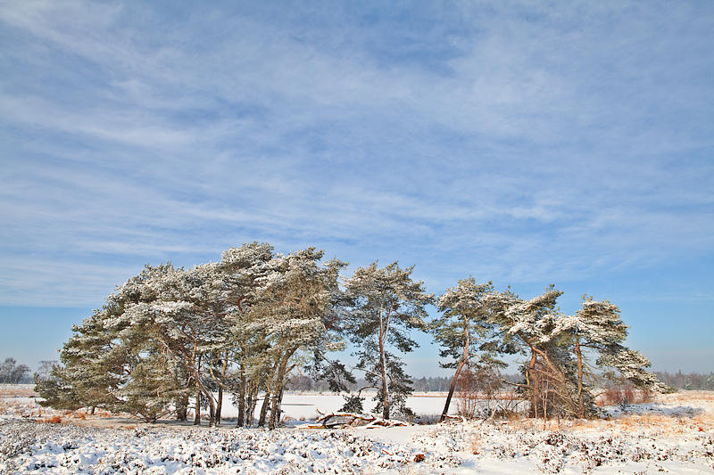 Pine Trees At Edge Of Frozen Lake Photograph  - Pine Trees At Edge Of Frozen Lake Fine Art Print