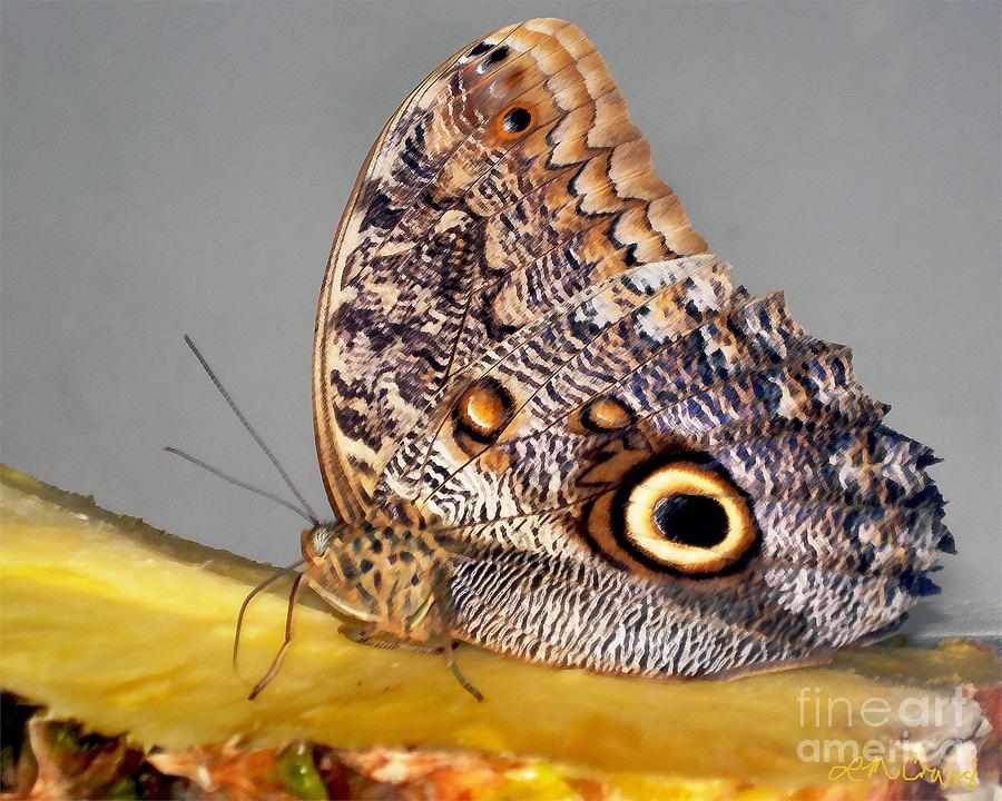 Pineapple Butterfly Photograph  - Pineapple Butterfly Fine Art Print