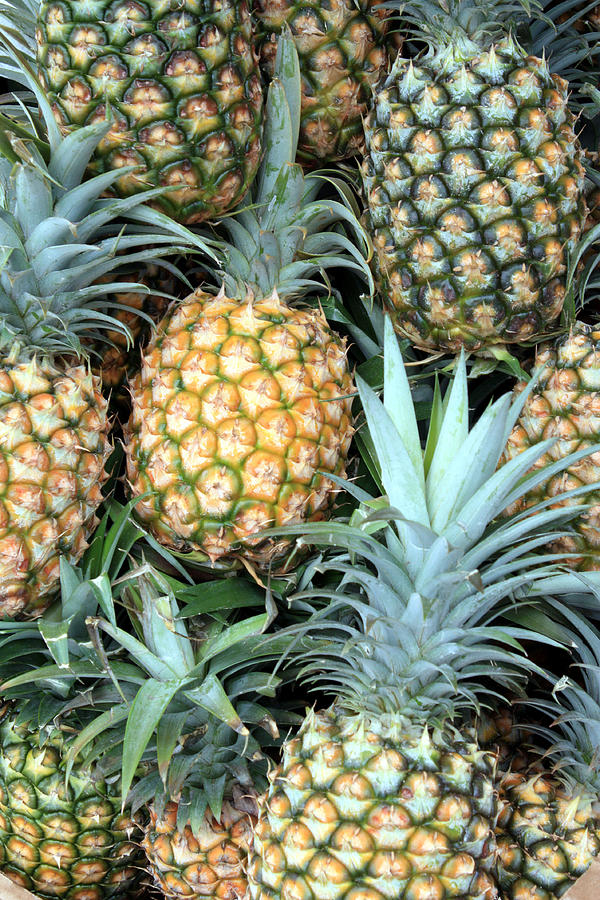 Pineapple Paradise Photograph