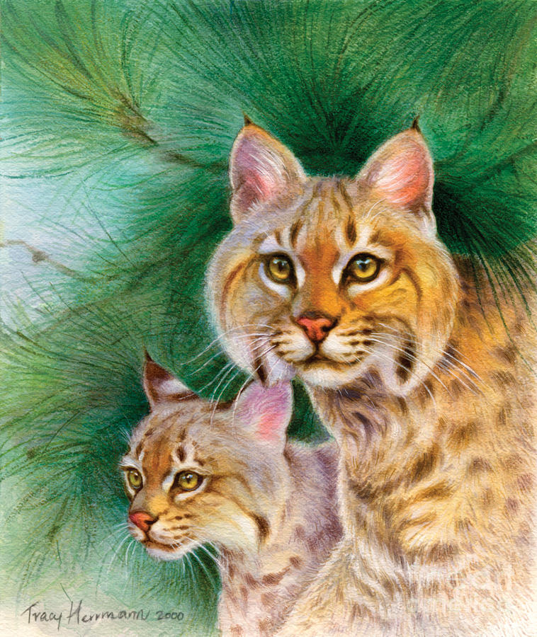 Pinewoods Bobcat Painting