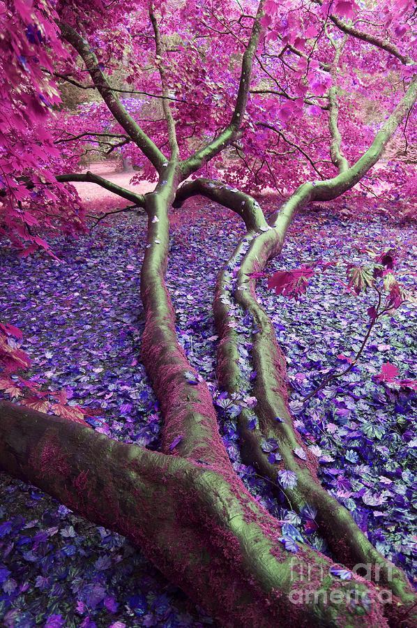 Pink Autumn Photograph
