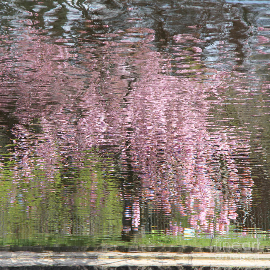 Pink Photograph - Pink Breeze by Karin Ubeleis-Jones