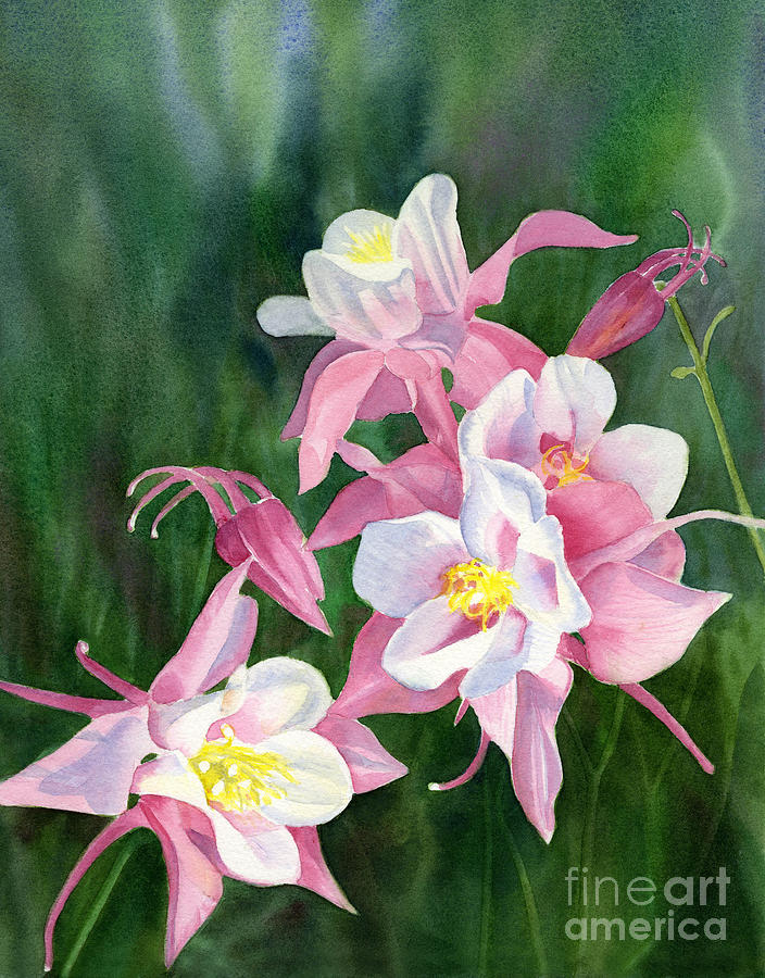 Pink Columbine Blossoms Painting