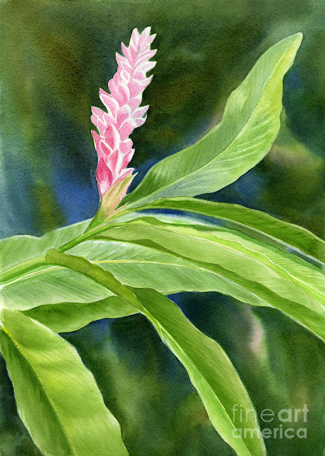 Pink Painting - Pink Ginger Flower by Sharon Freeman