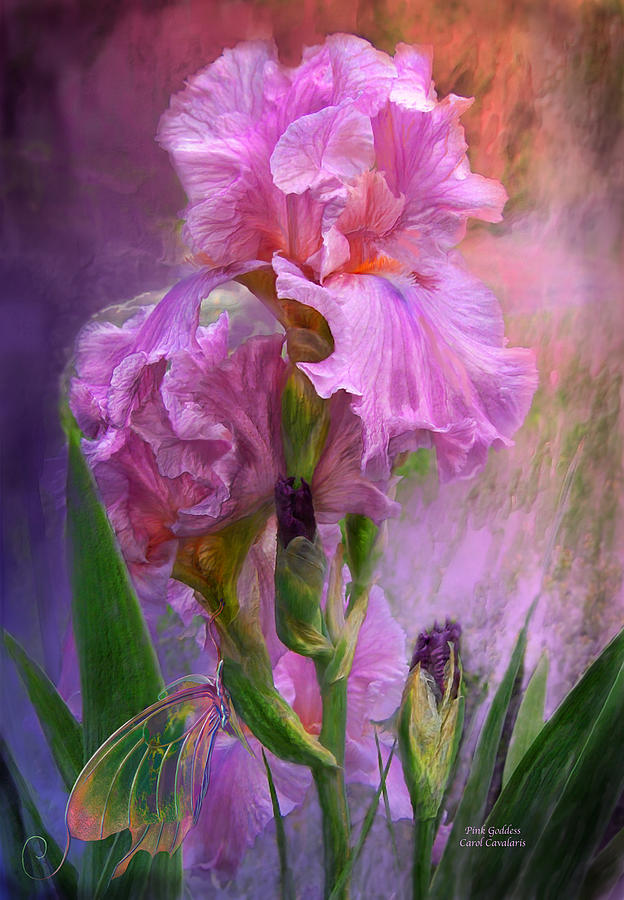 Iris Mixed Media - Pink Goddess by Carol Cavalaris