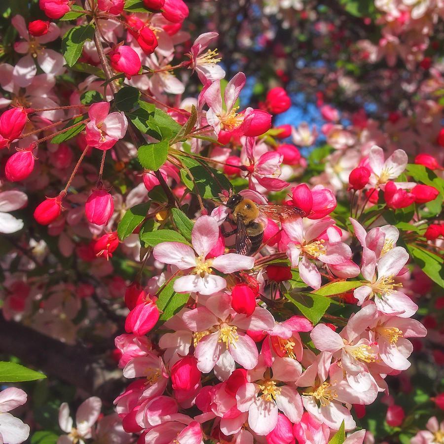 Pink Magnolia 2 Photograph