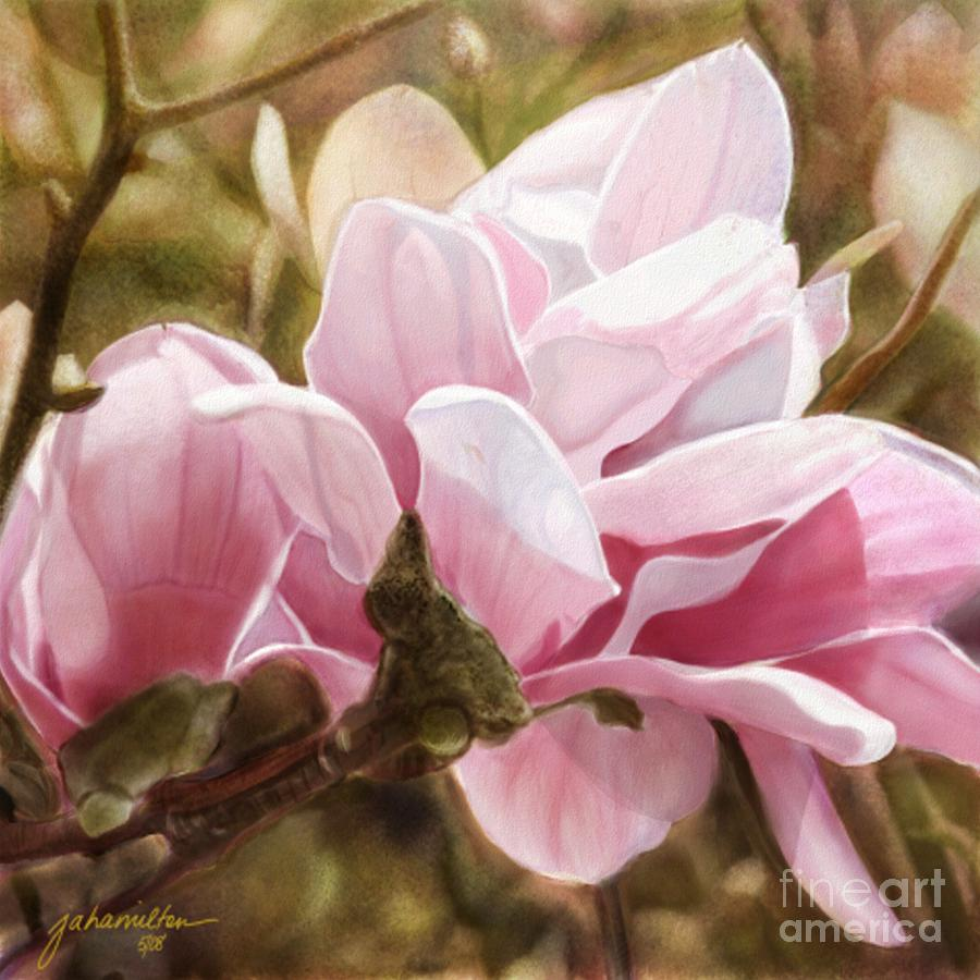 Pink Magnolia One Painting  - Pink Magnolia One Fine Art Print
