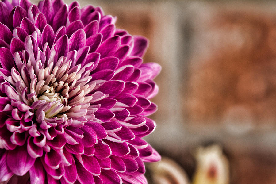 Pink Photograph - Pink Mum by Lana Trussell