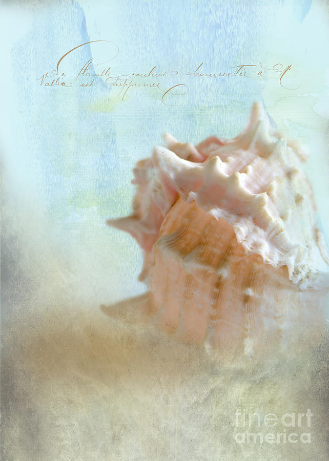 Sea Shell Photograph - Pink Murex Seashell by Betty LaRue