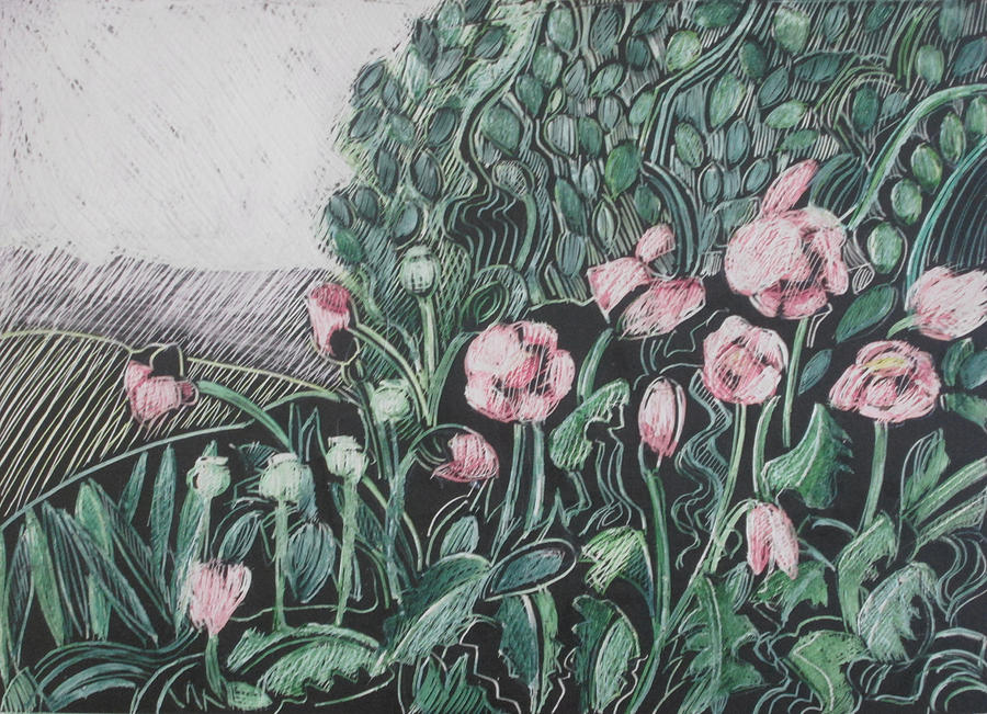 Pink Poppies Drawing