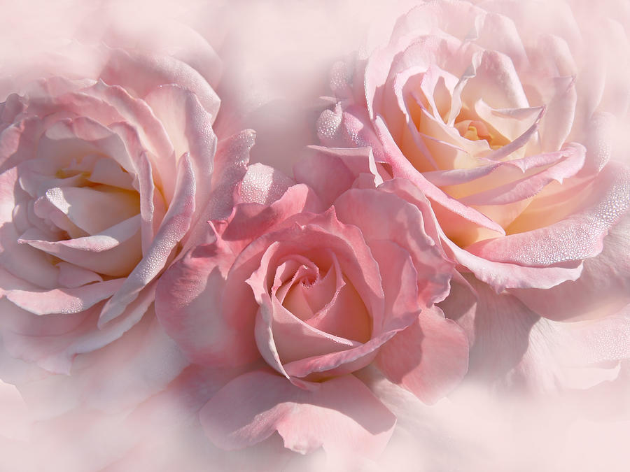 Pink Roses In The Mist Photograph