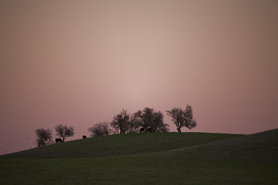 Pink Photograph - Pink Twilight by Joel Moranton