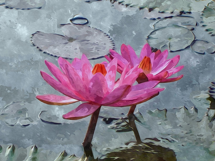 Pink Water Lily Flowers Blooming On Pond Painting