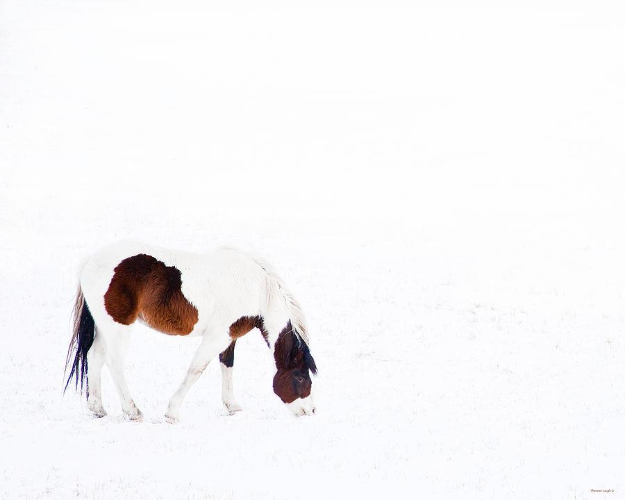 Small Horse Pyrography - Pinto Pony by Theresa Tahara