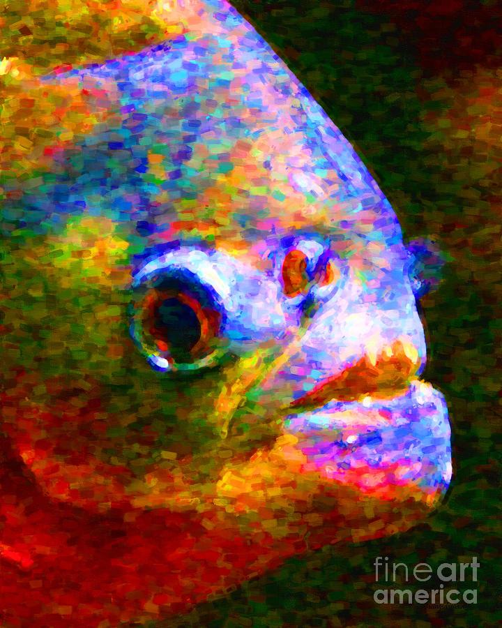 Piranha Photograph