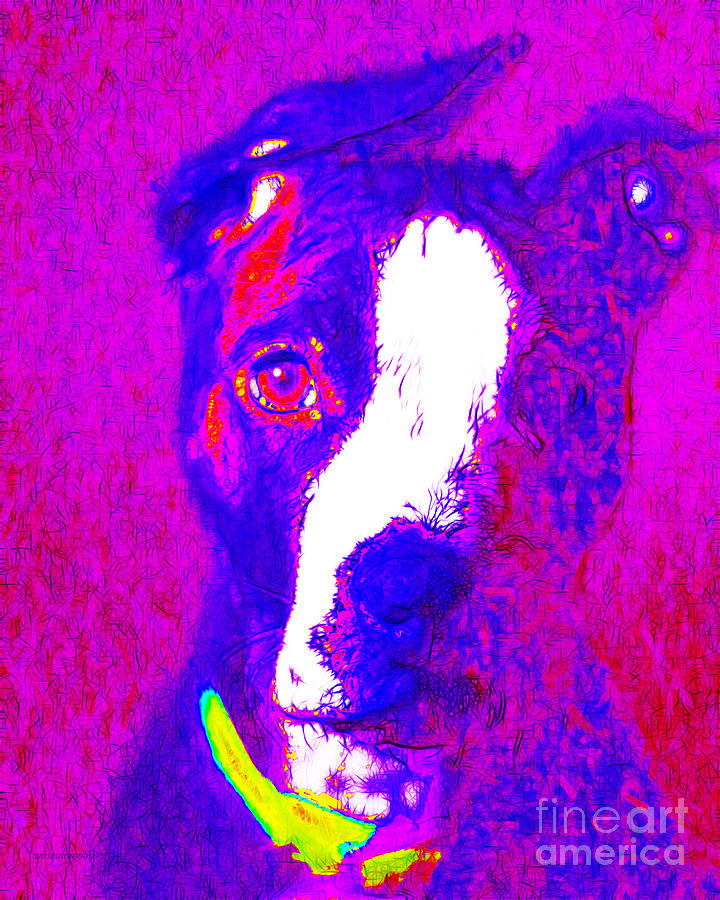 Pitbull Pop Art - 20130125v1 Photograph  - Pitbull Pop Art - 20130125v1 Fine Art Print