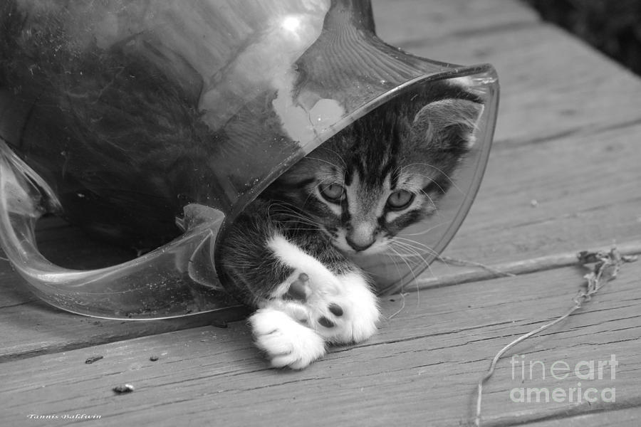 Pitcher Kitten Photograph  - Pitcher Kitten Fine Art Print