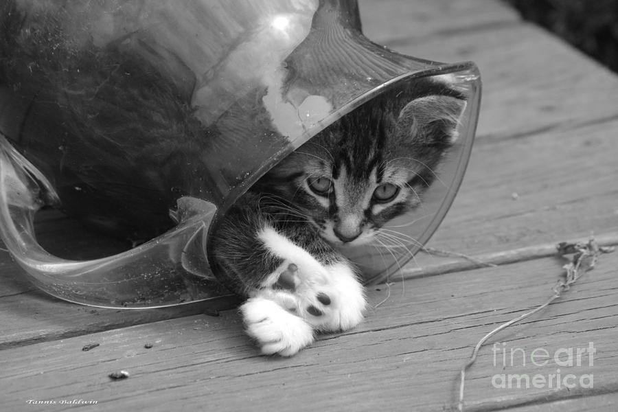 Pitcher Kitten Photograph