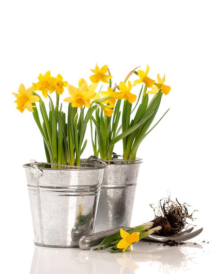 Planting Bulbs Photograph