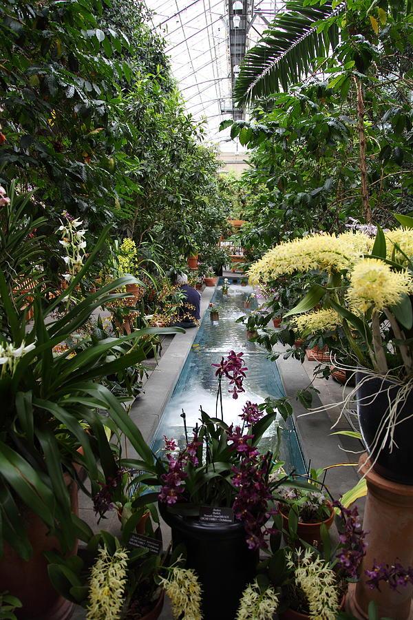 Plants Us Botanic Garden 01131 Photograph By Dc Photographer