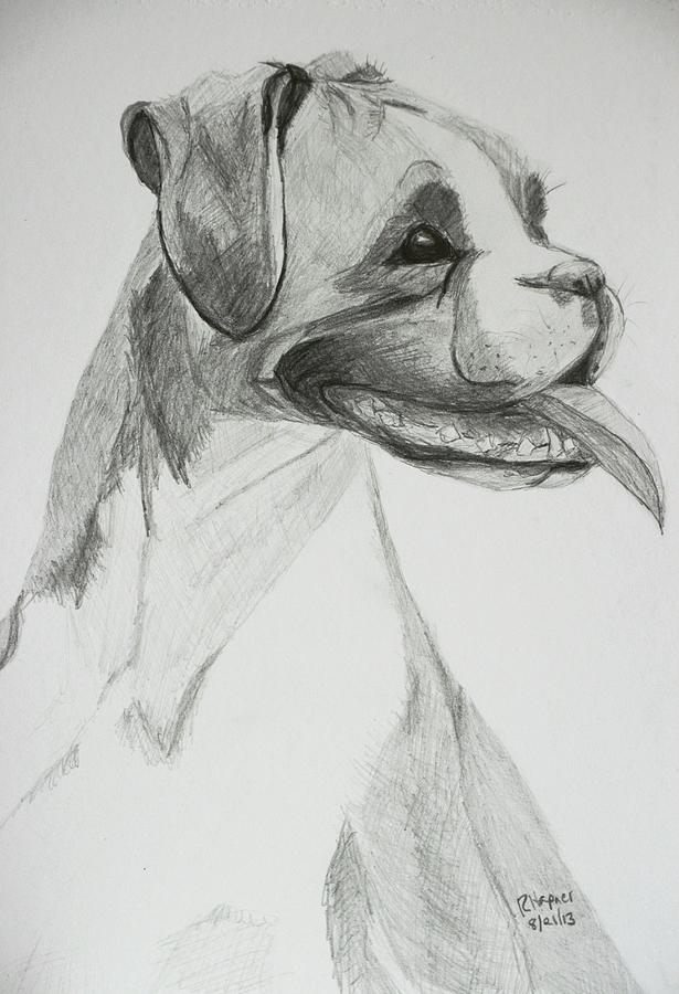 Playful Boxer Drawing