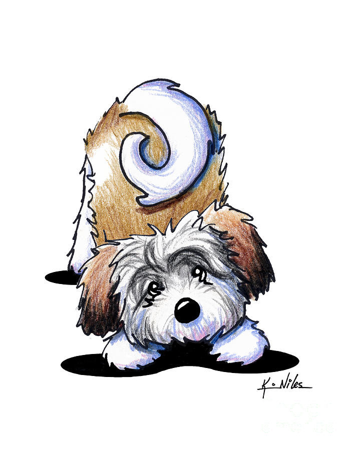 Playful Havanese Drawing  - Playful Havanese Fine Art Print