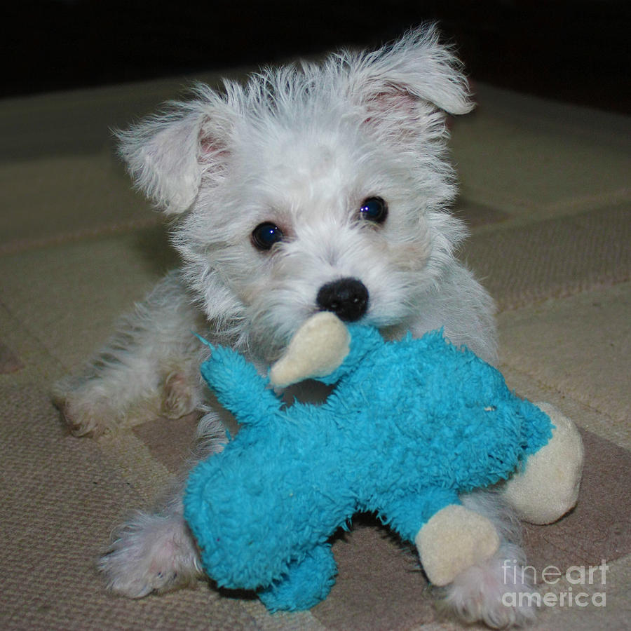 Playful Puppy Photograph  - Playful Puppy Fine Art Print