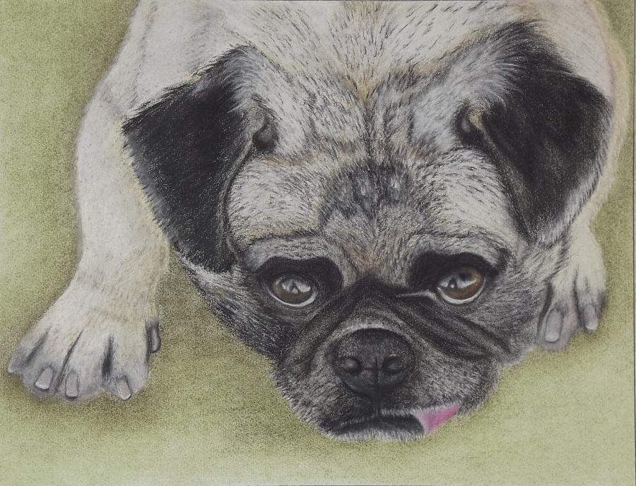 Pleading Pug Painting  - Pleading Pug Fine Art Print